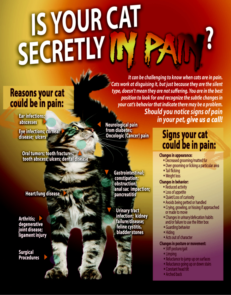 Is your cat secretly in pain flyer