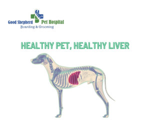 Dog with healthy liver