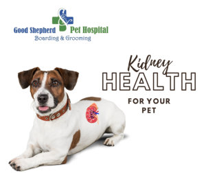 kidney health for you pet